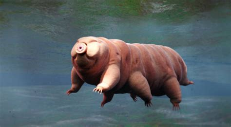tardigrade  choses  savoir sur lanimal le