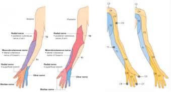 Lower Extremity Dermat...Dermatomes Netter