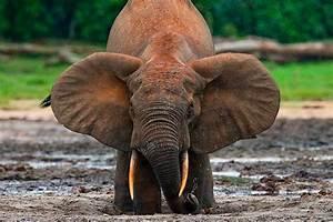 Central African Wildlife