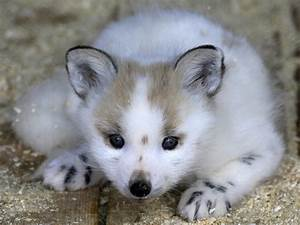 28 Of The Cutest Baby Animals
