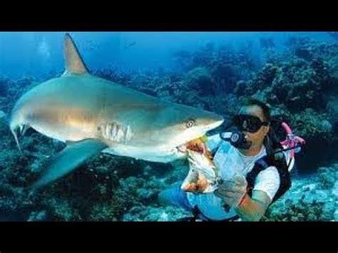 awesome scuba dives  coki beach st thomas  virgin