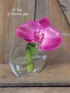 Orchideen Im Glas : tischdekorationen tischdekoration phalenopsis im glas ~ A.2002-acura-tl-radio.info Haus und Dekorationen