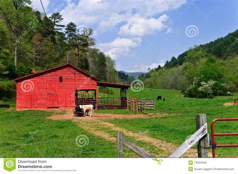 small cattle farm royalty  stock  image