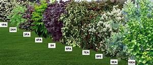 Haie Haute Et Rapide : haie fleurie mellif re en racines nues pr sentation jardin pinterest jardins plante ~ Dode.kayakingforconservation.com Idées de Décoration