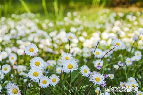 immagini prato fiorito sta prato fiorito su poster e quadri su misura kpixstore