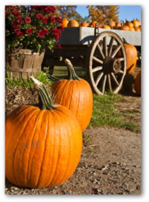 growing pumpkins   garden