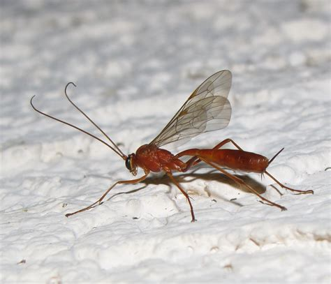 Bug Eric May 2012