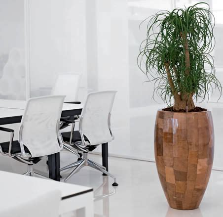 hire office interior landscaping within offices ambius ie