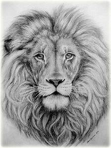 Gallery: Lion Face Pencil Drawing, - DRAWING ART GALLERY