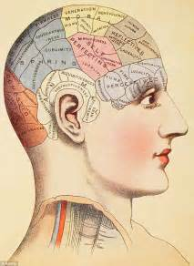 Female Brains Really Are Different To Male Minds With