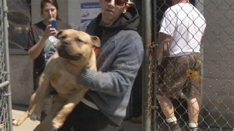man accused  animal cruelty reclaims  dogs