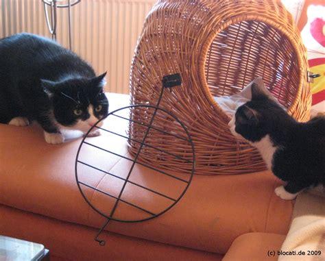wie gewoehne ich zwei katzen aneinander planzen und tiere