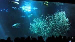 the monterey bay aquarium image gallery monterey bay aquarium fish