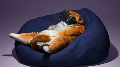 Virtual Cat Glasses Reality Funny Cool Background