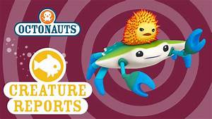 Octonauts  Creature Reports - Crab And Urchin