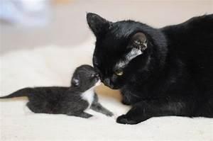 Mama and baby | Animals | Pinterest
