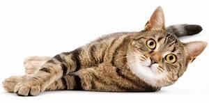 Site De Discussion : la pr histoire du chat wikichat ~ Medecine-chirurgie-esthetiques.com Avis de Voitures