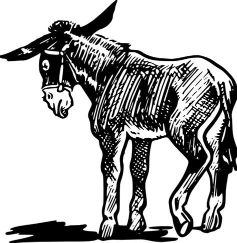 donkey outline  black  white clip art  clkercom