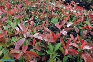 Mejores 88 Imágenes De Arbustos Y árboles Pequeños En