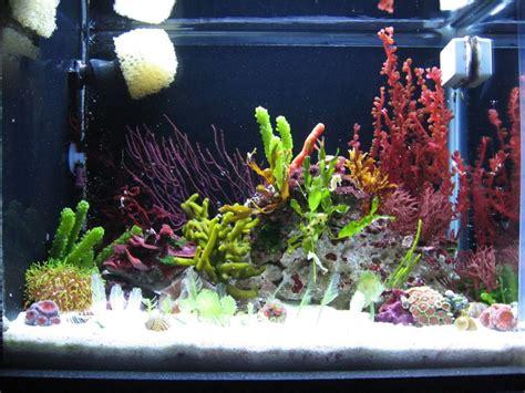 Beautiful Macro Aquascape W/dwarf Seahorses