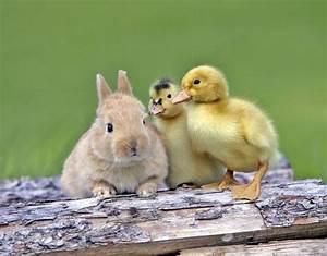 Cute Unlikely Animal Friends | www.pixshark.com - Images ...