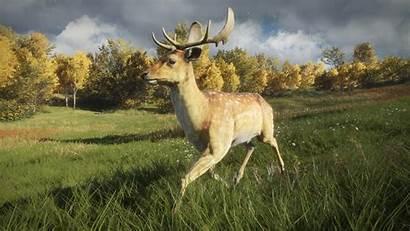 Wild Call Thehunter Damhirsch Wiki Wikia