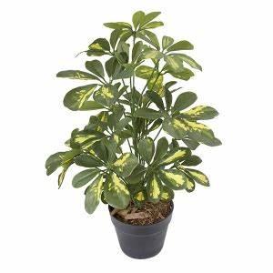 Mini Plante Artificielle : plante artificielle mini shefflera dor d cors v ronneau ~ Teatrodelosmanantiales.com Idées de Décoration