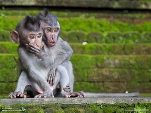 monkeys | Motley News