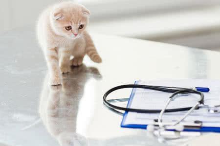 katzen op versicherung informieren und vergleichen