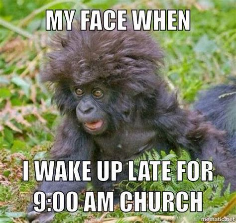 Monkey Face Meme - 20 funny monkey memes you ll totally fall in love with sayingimages com