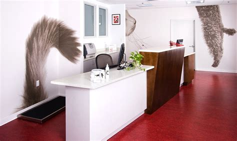 Award Winning Vet Clinic Combines Design With Personality