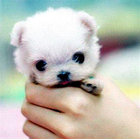 cute small dogs that stay small and don t shed cuteies