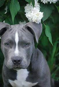 17 Best images about I Love Dogs on Pinterest   For dogs ...