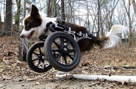 l animal handicap 233 qui a envie de vivre l unit 233