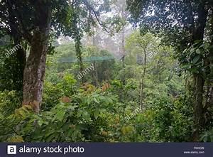 Rainforest canopy walkway, Danum Valley, Sabah, Borneo ...