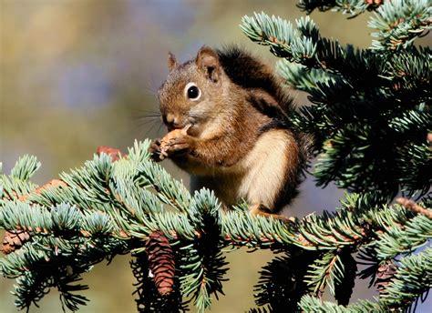 types  squirrels