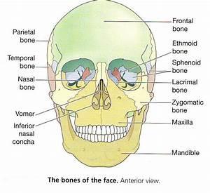 Mr  Scott Nguyen Anatomy Class