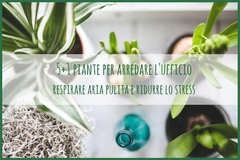 piante ufficio piante per arredare l ufficio aries partners