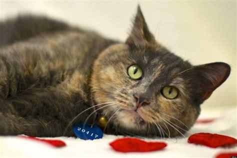cats  kittens  homes  arlington shelter reaches
