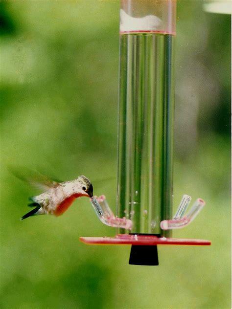 make a hummingbird feeder hummingbird feeder hb 1 by s feeders the unique