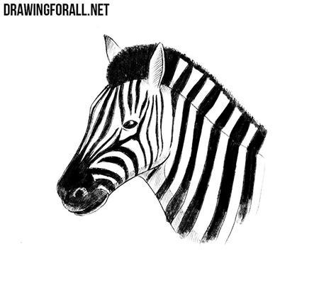 draw  zebra head drawingforallnet