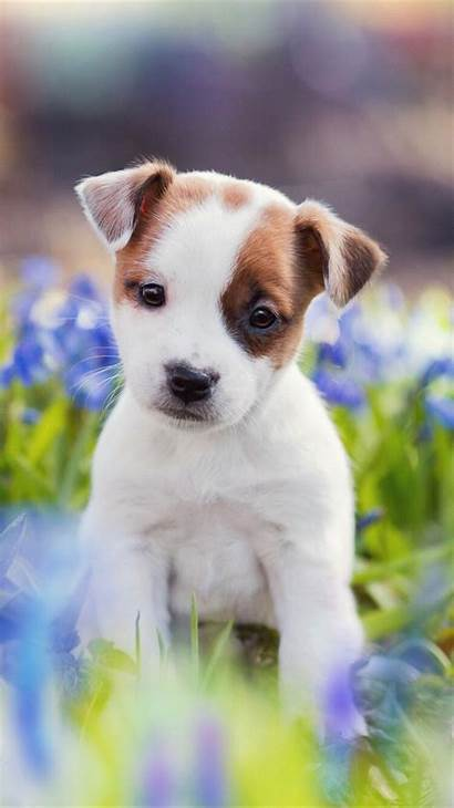 Puppy Iphone Puppies Dog Wallpapers Dogs Max