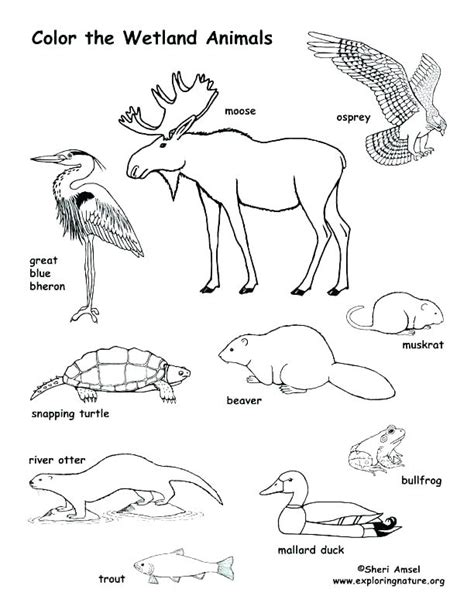 swamp animals coloring pages  getcoloringscom  printable colorings pages  print  color