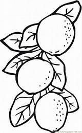 Lemon Coloring Lemons Printable Limes Colouring Drawing Slice Fruits Tree Lemonade Template Coloringpages101 Sketch sketch template