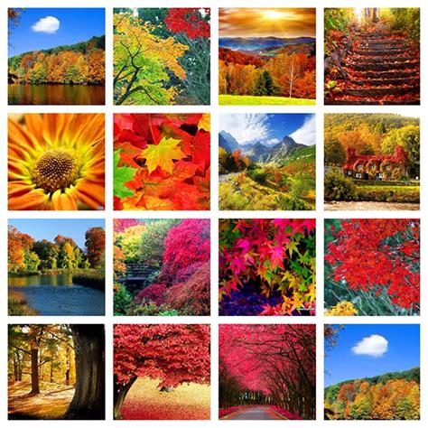 Nature mood board on Behance