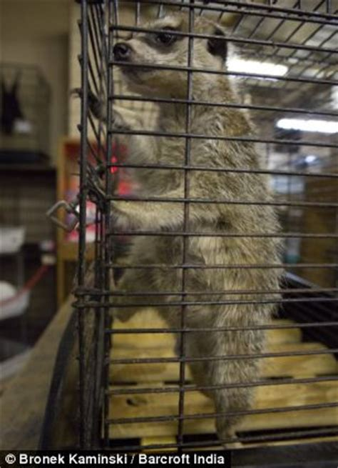 outrage  animal welfare groups  japanese pet shop