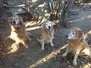 while away dog walking goldens bridge new york ny With dog walking services near me