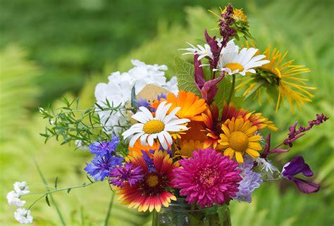 regalare fiori significato dillo con un fiore il linguaggio dei fiori frase per frase