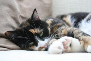 comment nettoyer urine de chat sur canape tissu nettoyant enzymatique urine chat condexatedenbay