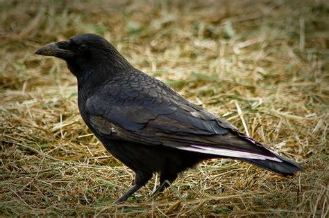 d 233 couverte reconna 238 tre les oiseaux du jardin et des